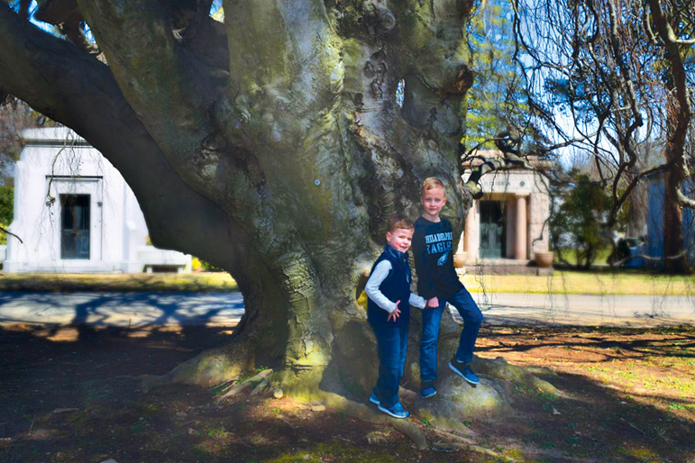 Big tree enthusiests, Matthew and John Ward inspect a Weeping European Beech Tree at West Laurel Hill Cemetery in Bala Cynwyd.