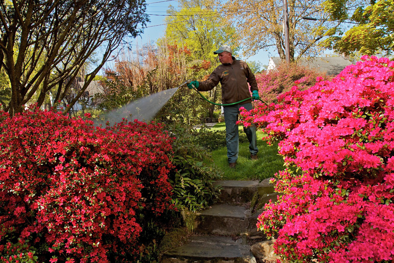 Bill O'Neil, ISA Certified Arborist, applies a foliar spray in Rosemont. We are constantly researching to bring you the safest, most effective controls available. This photo also reminds us of the amazing beauty that will be here in the spring!